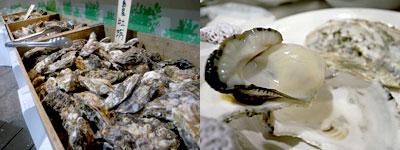 磯貝めんちゃんこのかきごや:牡蠣は糸島産や広島産、国産牡蠣で1キロ1,200円から。