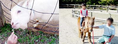 ポニーで乗馬体験