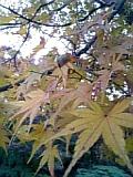 紅葉みたいな。.jpg